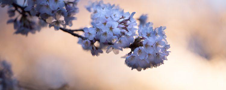 Aromatherapy & Skin Care